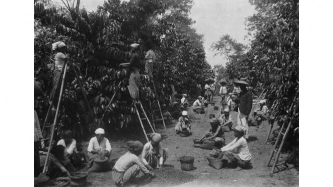 kerja paksa tanam kopi era kolonial