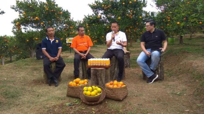 Kementerian Pertanian RI memperkenalkan Bujangseta untuk tanaman jeruk di Kota Batu.