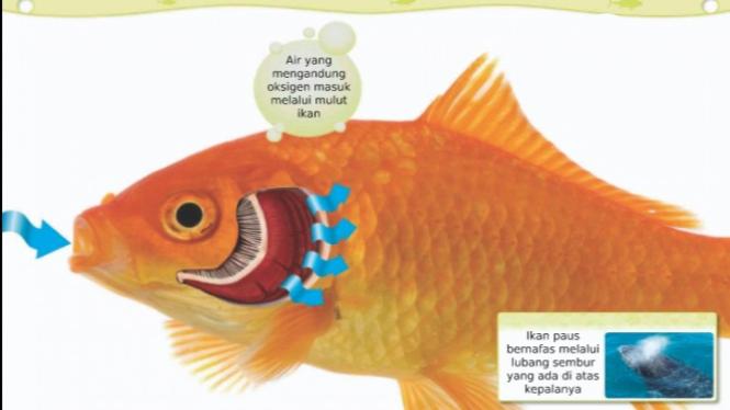 Download 42 Koleksi Gambar Ikan Ilustrasi Terbaru