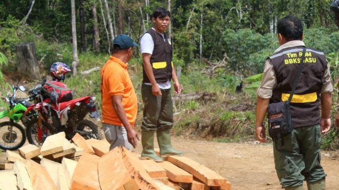 Tim CA Dolok Sipirok menghancurkan kayu hasil penebangan liar