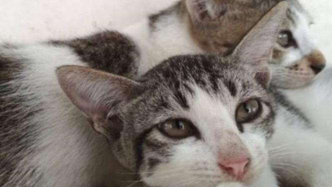 Kucing (ilustrasi)