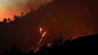 Kebakaran hutan terjadi si sejumlah wilayah Indonesia, salah satunya di wilayah Jawa Timur pada 1 Agustus 2019.