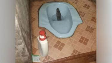 Ular di lubang WC.