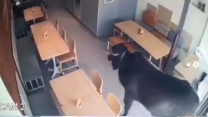 Sapi masuk ke kafe.