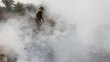 https://thumb.viva.co.id/media/frontend/thumbs3/2019/08/13/5d522065a7d25-siklus-kebakaran-hutan-di-indonesia-kembali-lagi-tidak-jelas-solusi-untuk-menanganinya_375_211.jpg