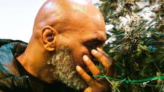 Mike Tyson dan bisnis ganja miliknya.
