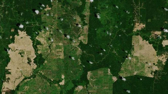 Citra satelit luar angkasa lahan perkebunan kelapa sawit di Kalimantan Timur
