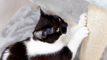5 Perilaku Kucing Yang Sebenarnya Sebuah Isyarat Kepada Manusia