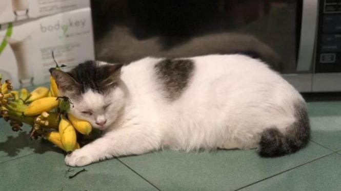 Unduh 78+  Gambar Kucing Sedih Paling Bagus