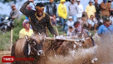 https://thumb.viva.co.id/media/frontend/thumbs3/2019/09/07/5d73c01c68b3a-kerapan-sapi-brujul-probolinggo-jadi-event-wisata-nasional_375_211.jpg