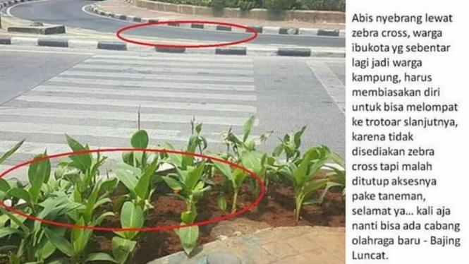 Foto tanaman yang halangi jalur zebra cross
