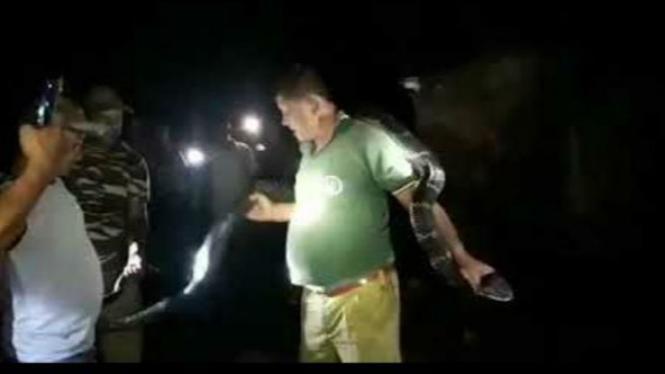 Pria kalungkan king kobra di leher.