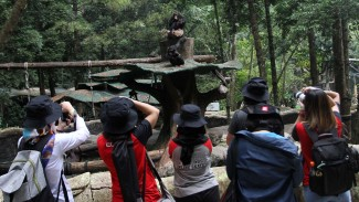 Sejumlah peserta memotret Simpanse saat lomba foto satwa 2019 di Taman Safari Indonesia, Cisarua, Kabupaten Bogor, Jawa Barat, Sabtu 14 September 2019.