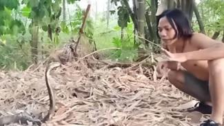 Pengejaran ular king kobra.
