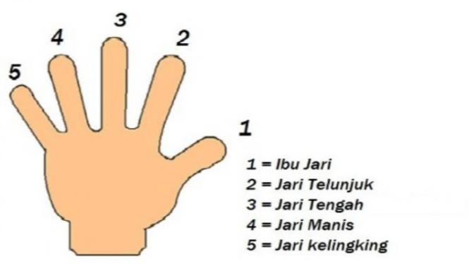 Lima jari manusia