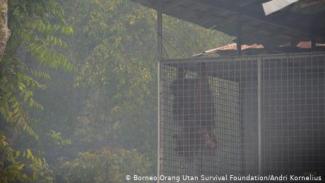 Borneo Orang Utan Survival Foundation/Andri Kornelius.