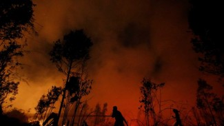 Taman Nasional Sebangau di Palangkaraya, Kalimantan Tengah, adalah salah satu pusat kebakaran.