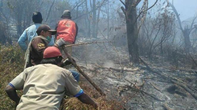 Petugas berusaha memadamkan kebakaran hutan di Gunung Merbabu, Jawa Tengah.