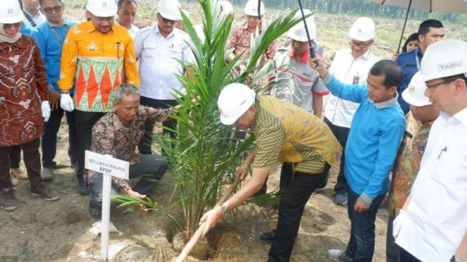 Sinar Mas Grup replanting kebun sawit petani plasma.