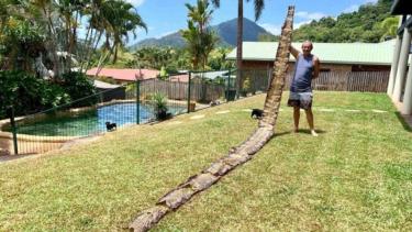 https://thumb.viva.co.id/media/frontend/thumbs3/2019/10/08/5d9bbc7436d01-warga-australia-temukan-kulit-ular-sanca-batik-7-meter-di-lingkungan-rumahnya_375_211.jpg