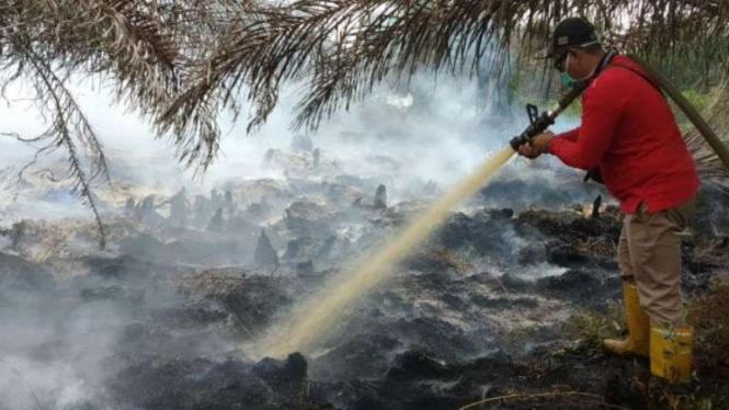 Ilustrasi: Petugas melakukan pemadaman kebakaran hutan.