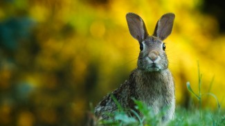 Hewan kelinci.