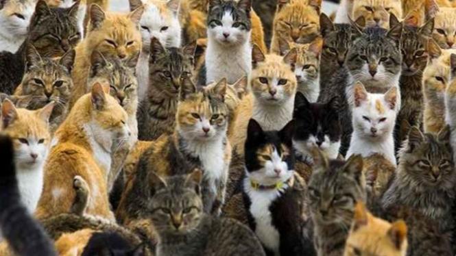 Pulau Kucing di Jepang