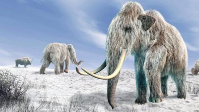 Mammoth Berbulu