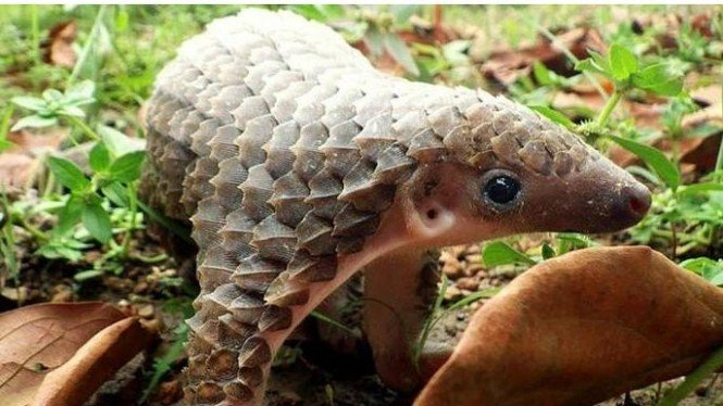 Ini adalah beberapa hewan aneh yang ada di Afrika