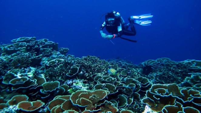 Peneliti Terumbu Karang dari Universitas Bung Hatta Padang