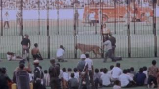 Pegulat Bandot Lahardo melawan singa di Stadion Gelora Bung Karno