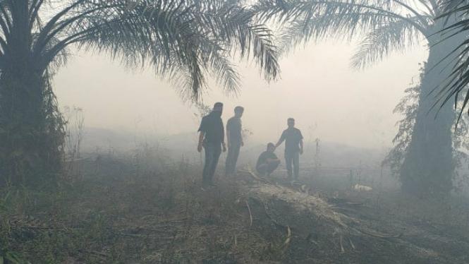 Kebakaran lahan di Siak