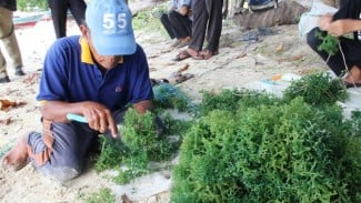 pengembangan budi daya rumput laut di Kepulauan Seribu.