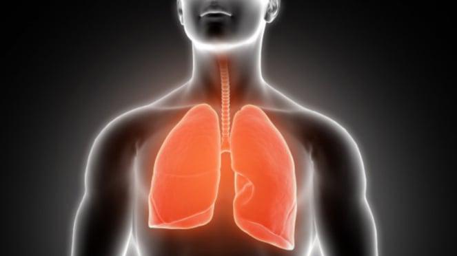 Ilustrasi paru-paru.