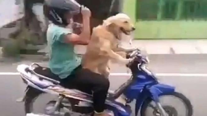 Seekor Anjing mengendarai sepeda motor