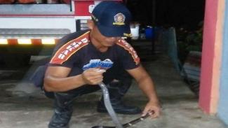 Petugas Damkar mengamankan seekor ular Kobra di Aceh Besar