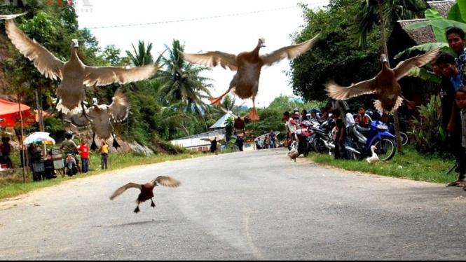Tradisi Pacu Itiak