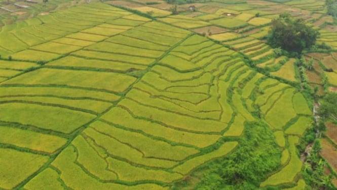 Lahan pertanian di wilayah Lumajang, Jawa Timur.