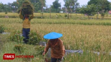 https://thumb.viva.co.id/media/frontend/thumbs3/2020/01/14/5e1dae75d8610-imbas-banjir-gresik-kerugian-di-sektor-pertanian-capai-rp-4-5-miliar_375_211.jpg