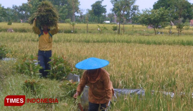 https://thumb.viva.co.id/media/frontend/thumbs3/2020/01/14/5e1dae75d8610-imbas-banjir-gresik-kerugian-di-sektor-pertanian-capai-rp-4-5-miliar_663_382.jpg