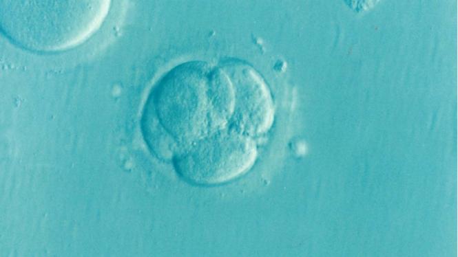 Ilustrasi bayi tabung.