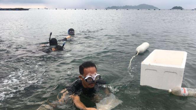 Petugas bea cukai Palembang lepas bayi lobster senilai Rp2,5 miliar