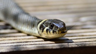 Ilustrasi ular