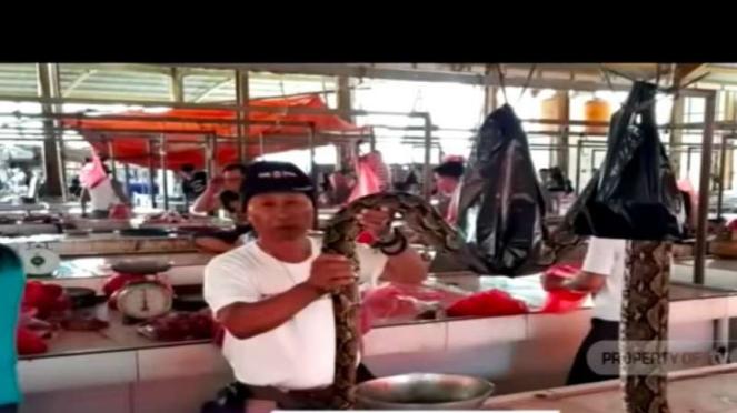 Seorang warga menunjukkan daging ular di Pasar Ekstrem, Kota Tomohon, Sulawesi Utara.