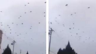 Ribuan burung gagak di langit Wuhan.