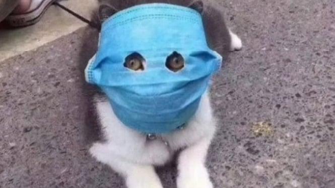 Kucing pakai masker.
