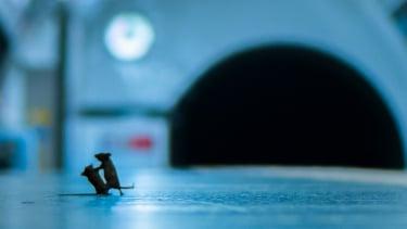 https://thumb.viva.co.id/media/frontend/thumbs3/2020/02/13/5e44befb6cea8-foto-tikus-bertengkar-di-stasiun-kereta-bawah-tanah-jadi-foto-pilihan-tahun-ini_375_211.jpg