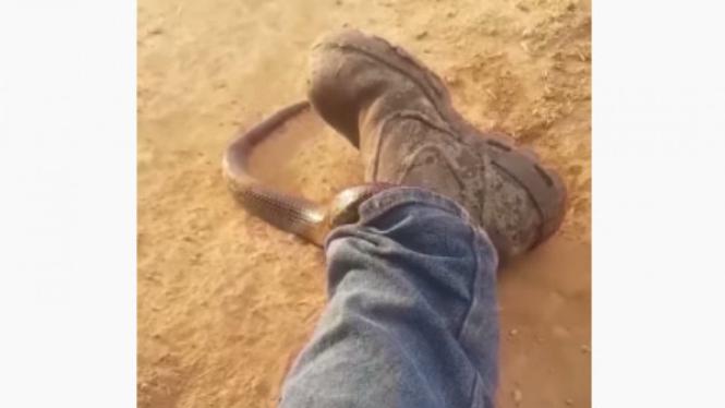 ular masuk ke dalam celana