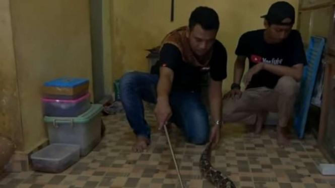 Panji dan viper