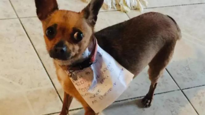 Berbekal catatan anjing pintar belikan snack untuk majikan.